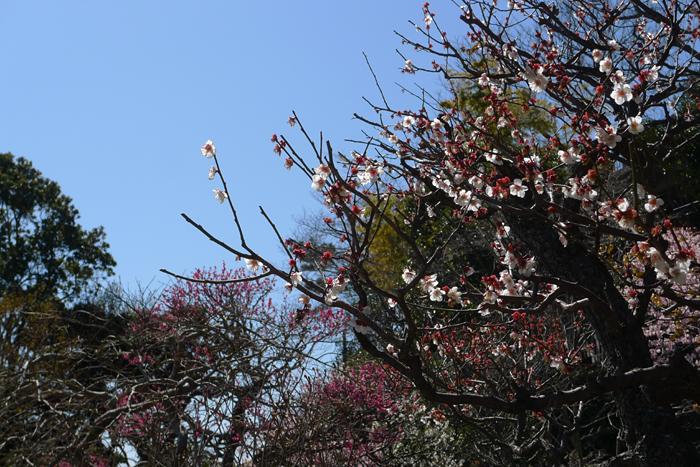 鎌倉 長谷寺  5