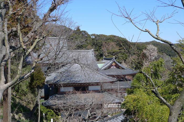 鎌倉 長谷寺  12