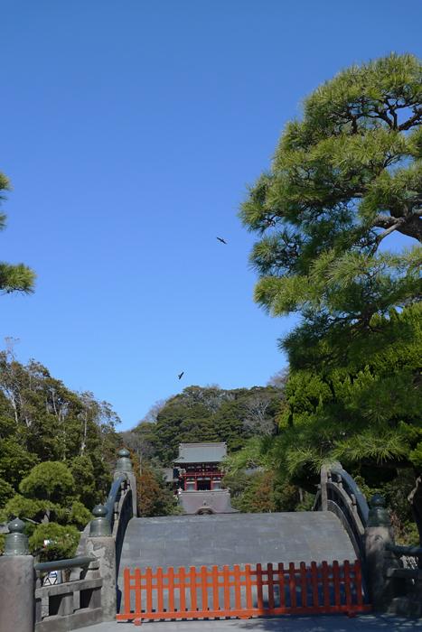 相模の国の神社 鶴岡八幡宮  4