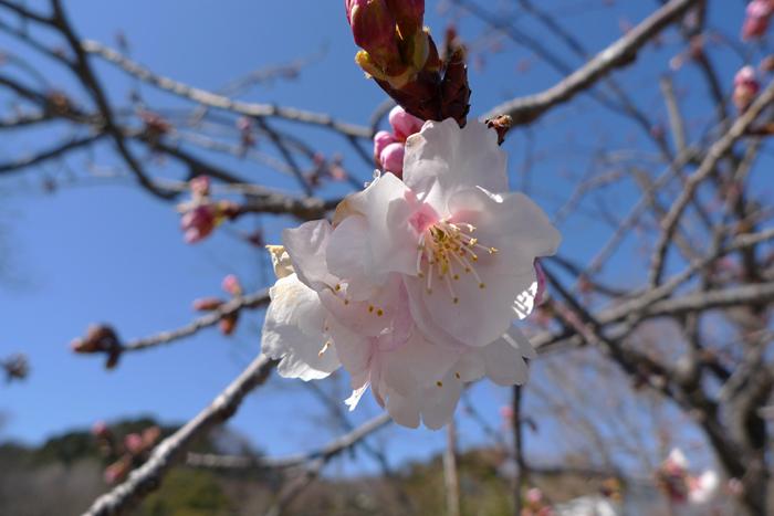 相模の国の神社 鶴岡八幡宮  6