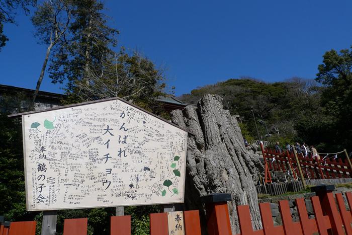 相模の国の神社 鶴岡八幡宮  28