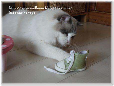 001-小さな靴160609-1