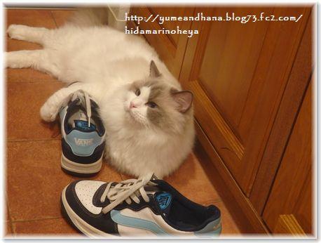 001-大きな靴160609-3
