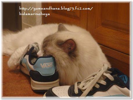 001-大きな靴160609-5