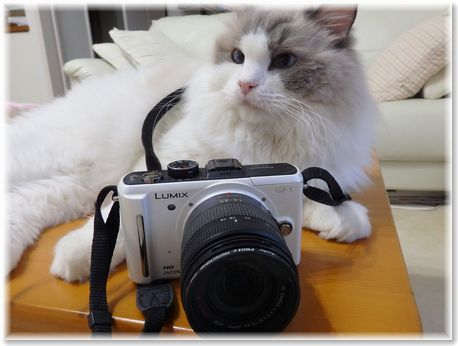 001-ベルカメラマン160904-11