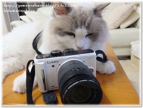 001-ベルカメラマン160904-12