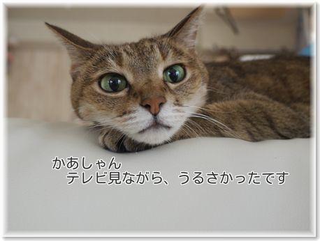 001-日本一dHf2_8sxwt2R2um1477759279_1477759324