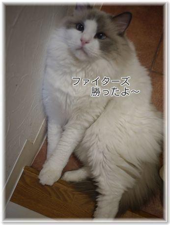 001-日本一LTEmAFFzPnO6t9m1477757343_1477757421