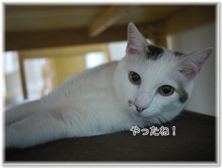 001-日本一TfFB9dPxkOviudV1477758618_1477758641