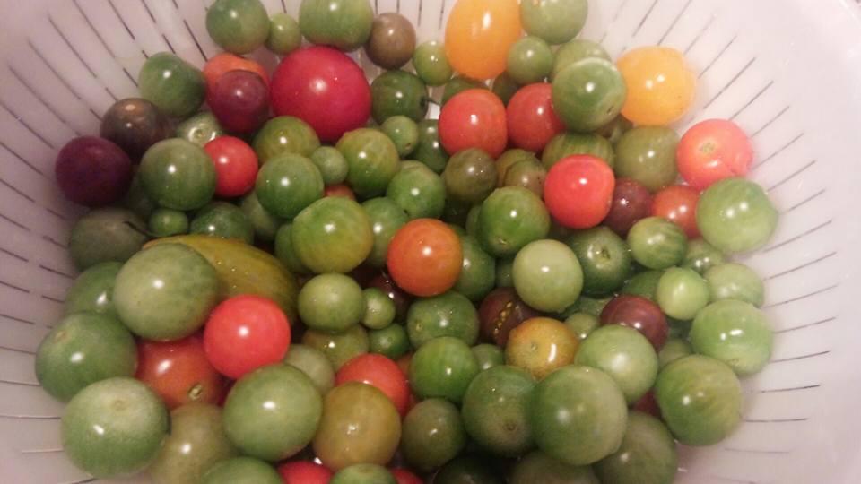 酵素トマト素材