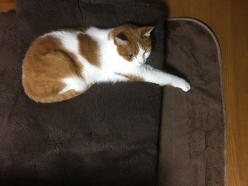 ブログNo.781(もこもこ座布団と猫)3