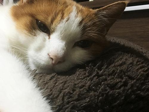 ブログNo.781(もこもこ座布団と猫)6