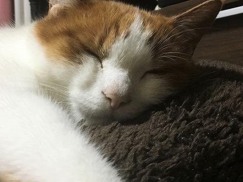 ブログNo.781(もこもこ座布団と猫)7