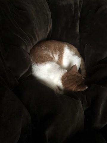 ブログNo.791(もこもこ座布団に負けない&横浜猫写真展)1