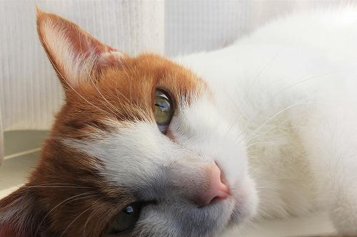 ブログNo.784(日光猫と肉球)10