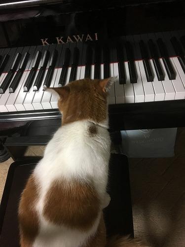 ブログNo.810簡単(ピアノと猫&浮気猫)1