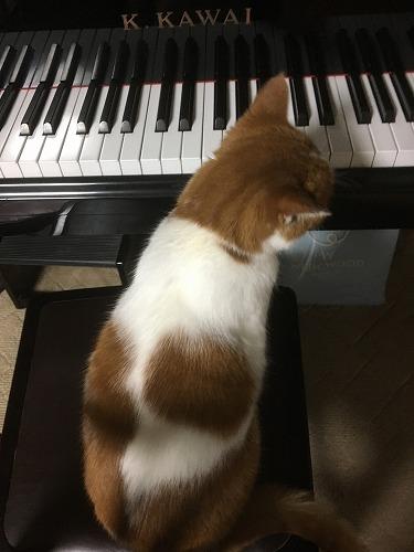 ブログNo.810簡単(ピアノと猫&浮気猫)2
