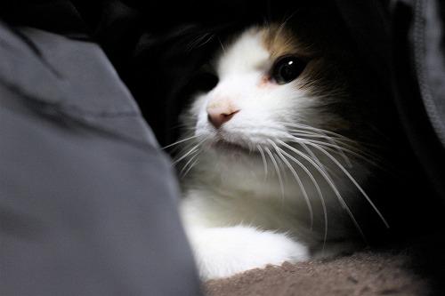 ブログNo.812(潜り猫ニャンバー3(終))1