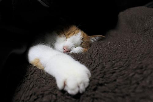 ブログNo.812(潜り猫ニャンバー3(終))9
