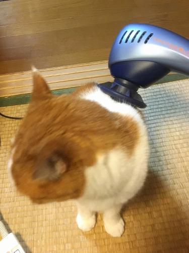 ブログNo.815(病院に行く前の猫)6