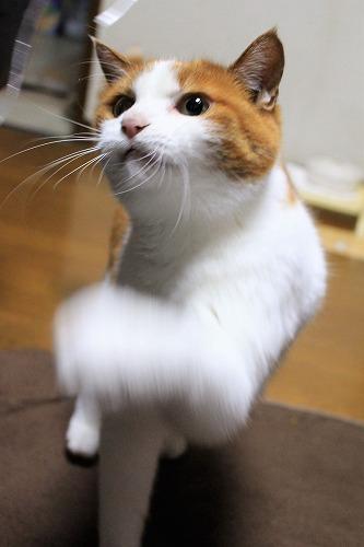 ブログNo.814(夢中になると立つ猫)1