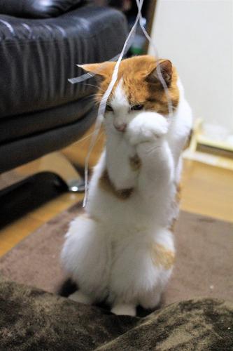 ブログNo.814(夢中になると立つ猫)6