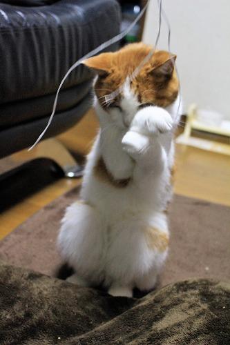 ブログNo.814(夢中になると立つ猫)7