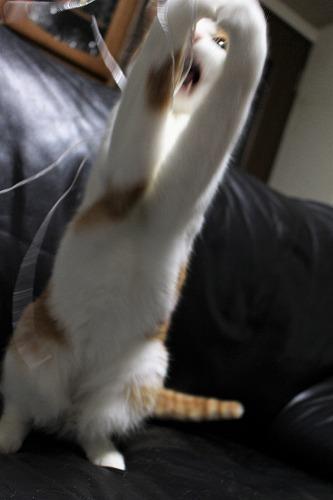 ブログNo.814(夢中になると立つ猫)9