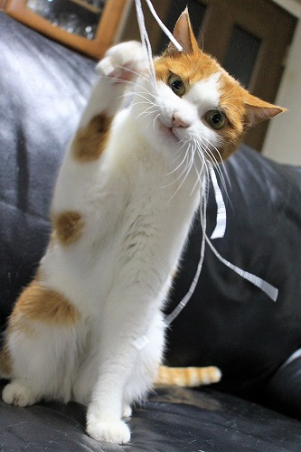ブログNo.814(夢中になると立つ猫)11