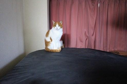 ブログNo.815(病院に行く前の猫)3