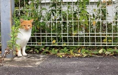 ブログNo.784(日光猫と肉球)1