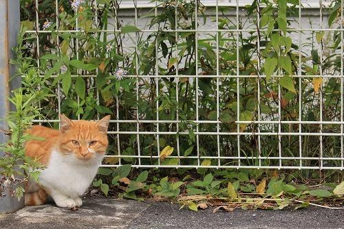 ブログNo.784(日光猫と肉球)6
