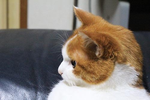 ブログNo.767お知らせ(おっさん猫の見てるのは?)3