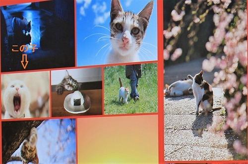 ブログNo.791(もこもこ座布団に負けない&横浜猫写真展)10