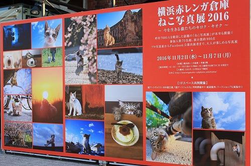 ブログNo.791(もこもこ座布団に負けない&横浜猫写真展)9