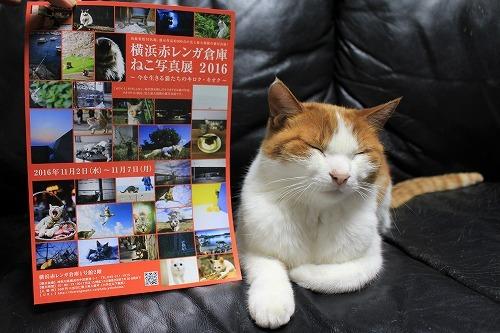 ブログNo.775(猫巻き巻き)1