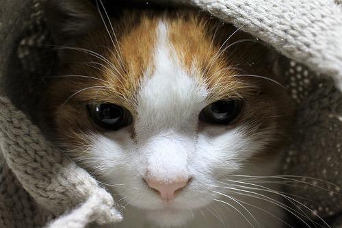 ブログNo.775(猫巻き巻き)7