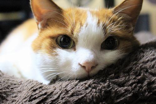ブログNo.781(もこもこ座布団と猫)8