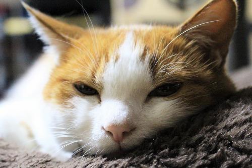 ブログNo.781(もこもこ座布団と猫)9