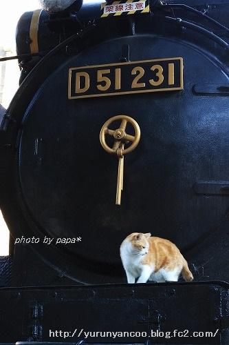 ブログNo.790(平和&上野猫)9