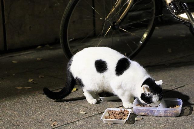 ブログNo.790(平和&上野猫)14