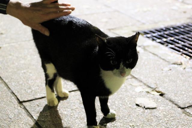 ブログNo.790(平和&上野猫)17