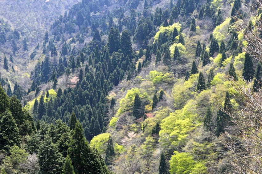 新緑風景2