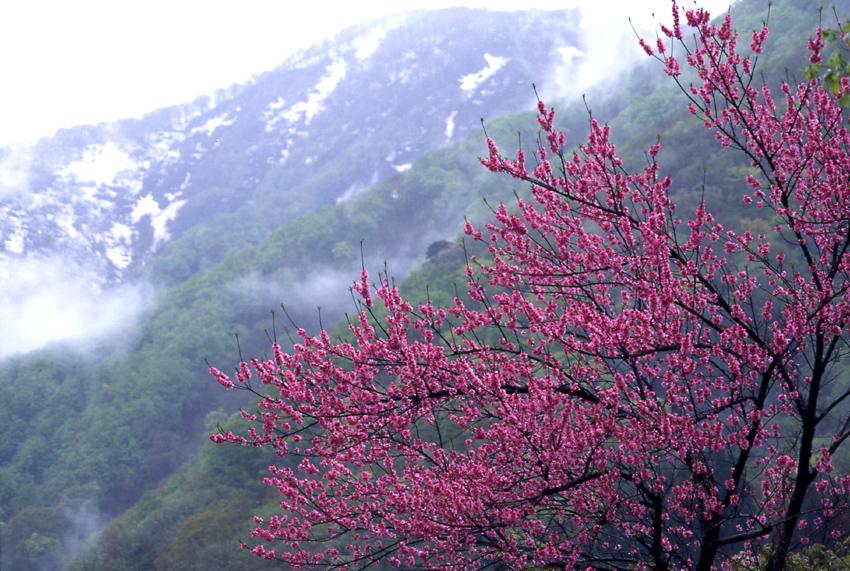 a越中五箇山(春)2