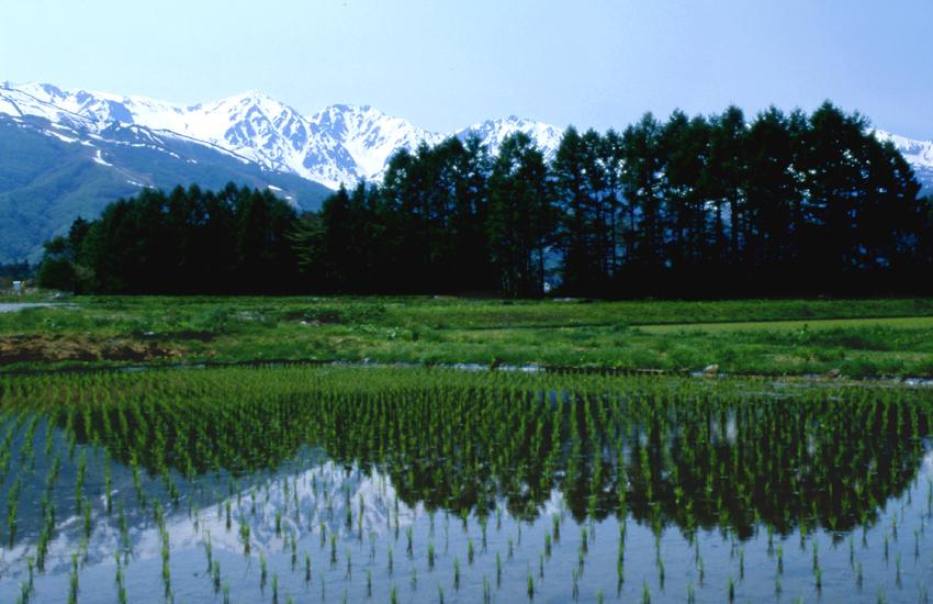 白馬山麓(春)01