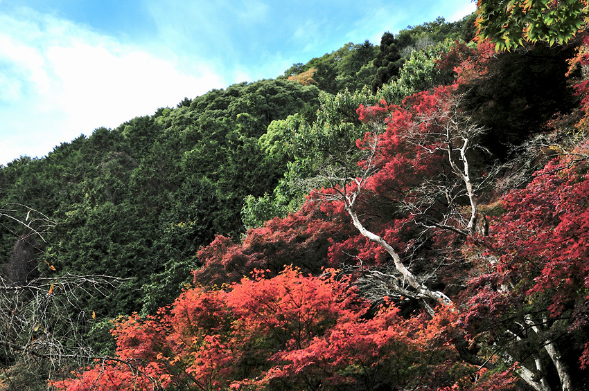 金蔵寺05