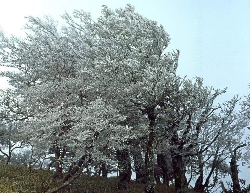 大台ヶ原(秋)03