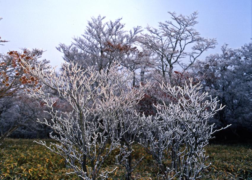 大台ヶ原(秋)05