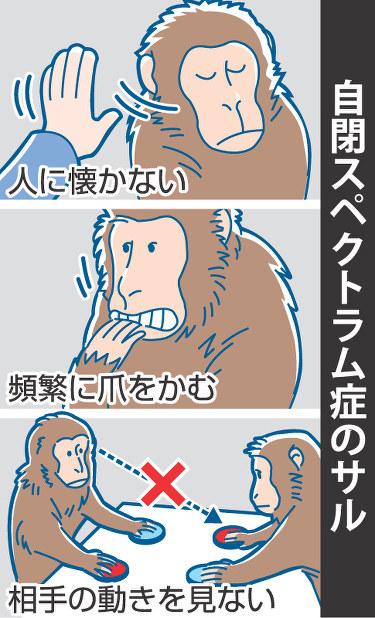 自閉症 猿