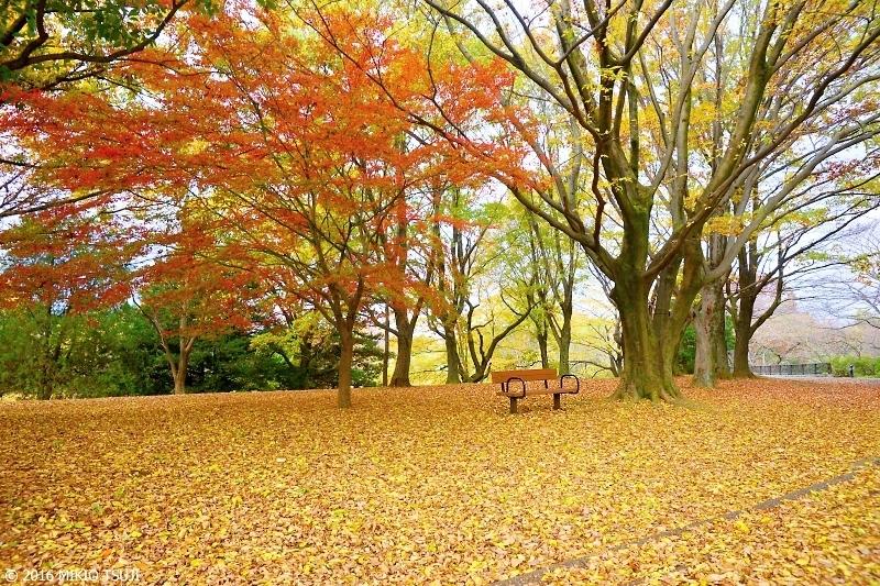 絶景探しの旅 - 0049 落ち葉の絨毯 (国営昭和記念公園 東京 立川)